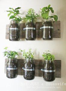 3 Best DIY herbs to plant in the garden